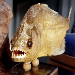 real Piranha, dried piranha for sale, yellow piranha mounted