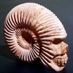 Ammonite-Skull-Carved-Fossil