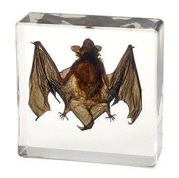 Small-Bat-Resin-Bat-Acrylic