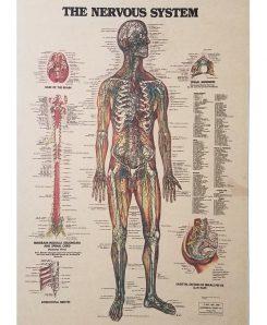 Vintage-Medical-Poster-Nervous-System