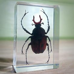 Beetle in Resin, Insect in Lucite, Long Armed Scarab Beetle