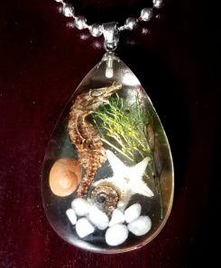 Real Seahorse Pendent Necklace Oddities Grants Pass