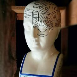 Large-Phrenology-Bust-Phrenology-Head