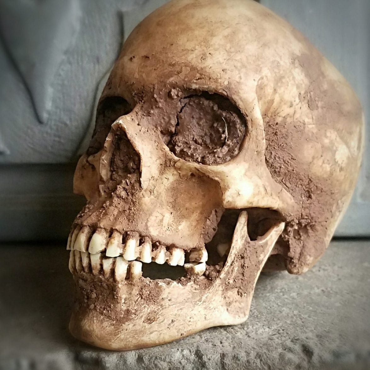 Best Realistic Human Skull Replica, Real Human Skull, Human Medical Skull