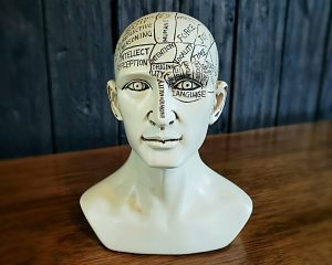 Phrenology Head Bust, Phrenology, Vintage Medical, Oddities Curiosities
