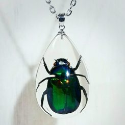 Real Beetle Pendant, Scarab, Real Insect Jewelry, Insect in resin, Insect in Lucite