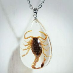 Real Scorpion Pendant, Real Insect Jewelry, Insect in resin, Insect in Lucite
