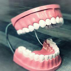 Giant Teeth, Oddities, Curiosities, Vintage Dental, Creepy Antiques