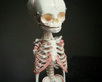 Human Fetal Skeleton, Fetus Skeleton, Oddities, Curiosities, Creepy, Weird, Realistic Skull