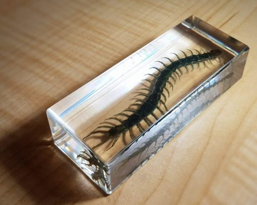 Real Centipede in resin, Lucite, Insects in resin, Oddities