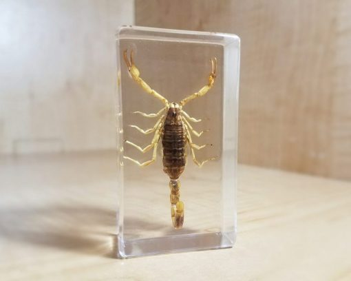 insect in resin, Large Golden Scorpion, Lucite