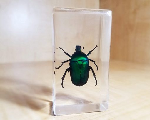 Green Chafer Beetle in Resin, Lucite, Insects in Resin