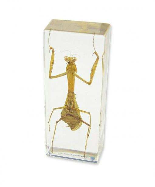 Insects in Resin Preying Mantis Resin, Lucite Insects