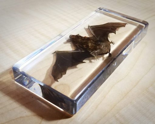Open Wing Bat in resin, Large Real Bat Taxidermy, Lucite