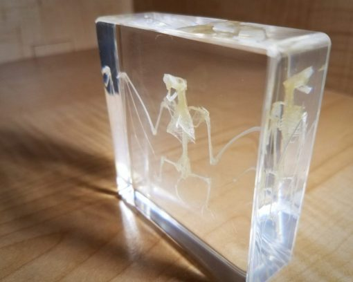 Real Bat Skeleton in Resin, Bat Skull, Lucite