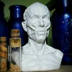 Human Muscle Bust, Oddities Curiosities, Vintage Medical