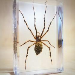 Preserved Spider in Resin Specimens in Lucite