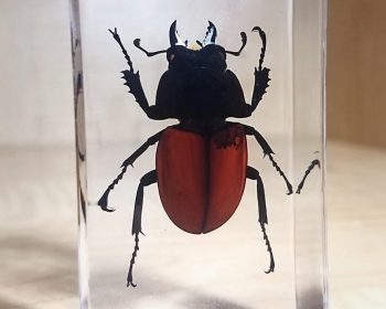 Specimens in Resin, Insect in Lucite, Bugs in Resin