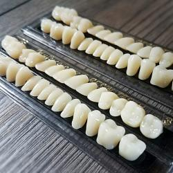 Human teeth, bizarre, oddities, curiosities, resin teeth