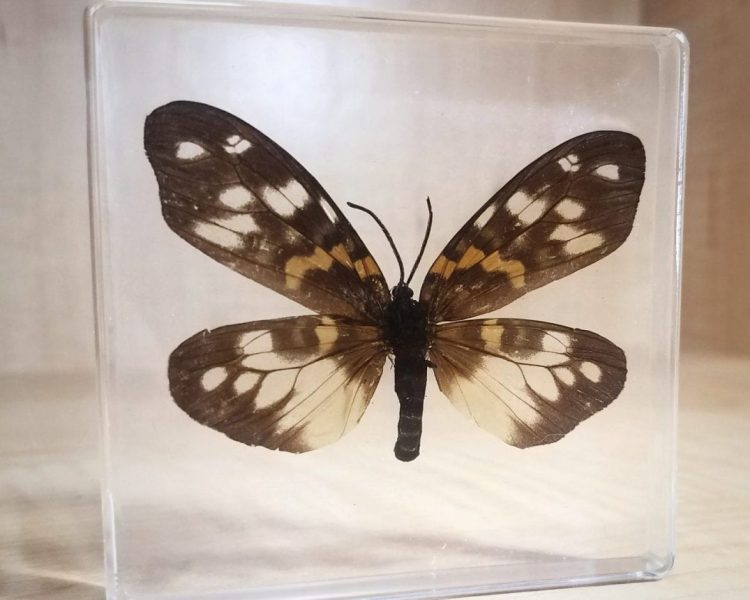 Moth in resin, Insects in resin, lucite specimens, moth