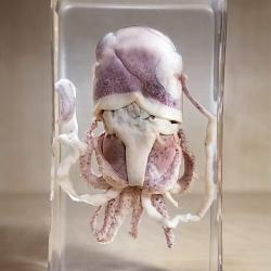 Octopus in resin, Octopus specimen Lucite
