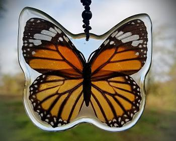 Real Butterfly Necklace, Real Butterfly in Resin