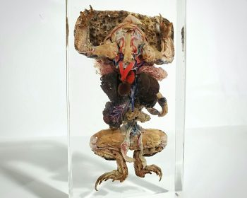 Dissected Toad In Resin, Dissected Frog, Oddities Curiosities, Lucite Specimens