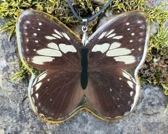 Real Butterfly Display, Real Butterfly Necklace