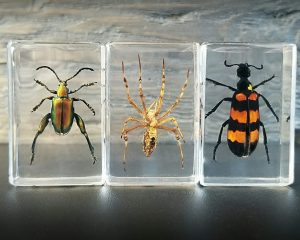 Small insects in resin, Real bugs in resin, Lucite Specimens