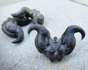 Devil Seed Pods, Devil Seeds, Good Luck Charm, Witchcraft Herbs